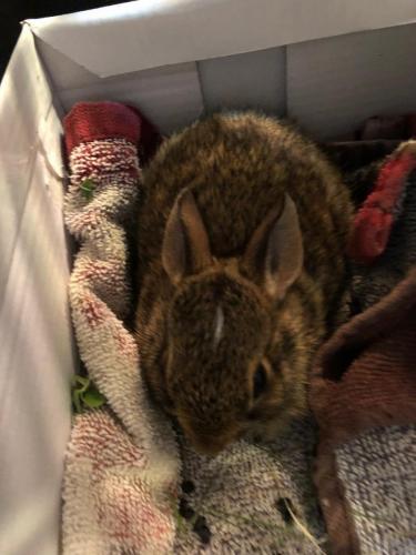 Bunny-e1587152618909
