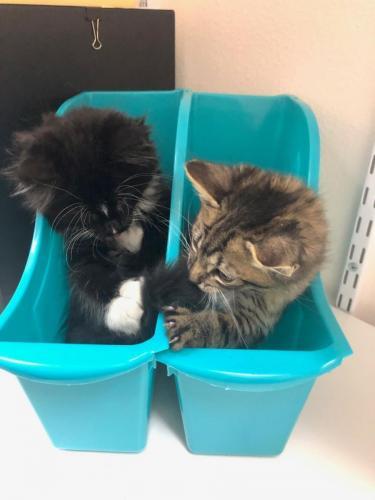 Foster-kittens-Bruce-and-Dobby-e1587152574717