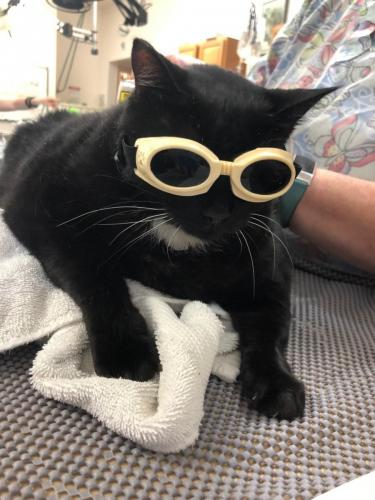 Kitty-laser-therapy-e1587152548692