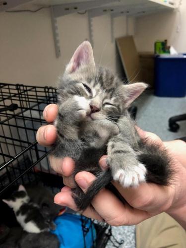 foster-kittens-e1587152565940